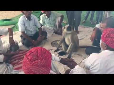 RAJASTHANI VIDEO!!!! FUNNY VIDEO!!!! NASHA WITH ANIMAL | Naresh Choudhary Uploads