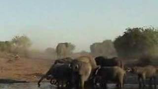 Parc National Chobe Botswana (AA-7)