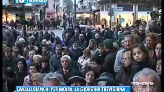 TREVISO TG - 18/11/2015 - CAVALLI BIANCHI PER MOIRA,LA GIORGINA TREVIGIANA