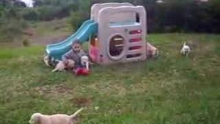 cachorros labrador grecia