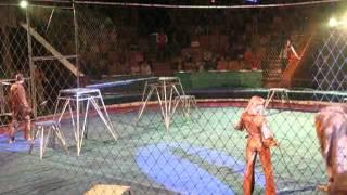 Kinh hoàng sư tử vồ huấn luyện viên ngay trên sân khấu