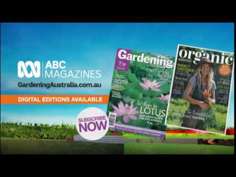Dreaming Of A Quiet Christmas Abc Christmas 2018 Gardening
