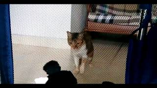 Funny scared cats compilation