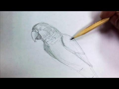 Как нарисовать змею Рисунок кобры поэтапно карандашом