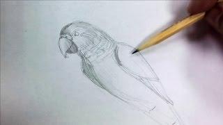 видео Логотип Попугаи На Ветке