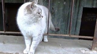 Бездомная кошка.Бэлла