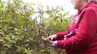 Gardening with Peg | Pruning
