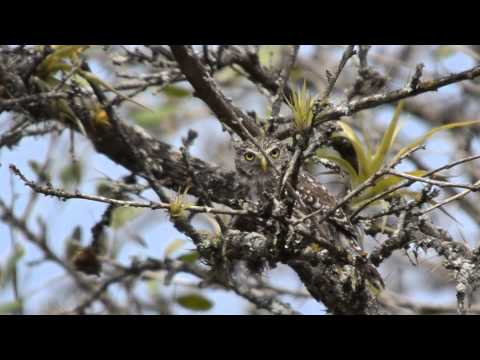 BIRDING AND FISHING NORTHWEST PERU AND CABO BLANCO