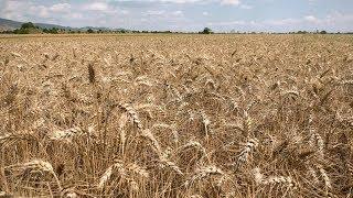 Успешното земеделие на България - 19-ти филм,  2019 г.