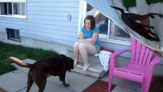 Repeat youtube video Personal assistance dog, week six homewrok