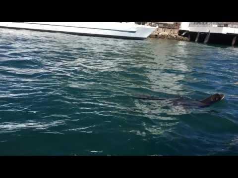 Cabo San Lucas seal