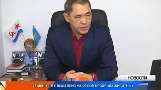 28 млн тенге выделено на отлов бродячих собак и кошек в Уральске