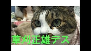 猫 親子 娘 可愛い おもしろい いたずら 癒やし かわいい 楽しい 癒し ...