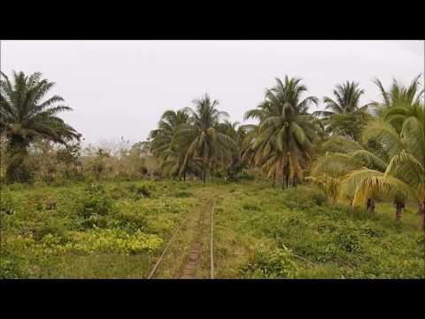 Train to Cuero Y Salado Wildlife Refuge in Honduras
