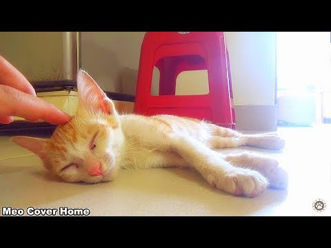 Cat Sleeping In Weird Possition So Cute | Funny Cat Vines 2017 | Meo Cover Home