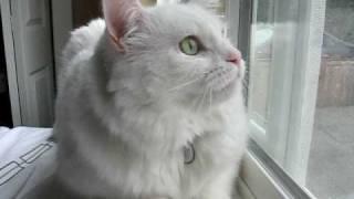 Cat Talking to Birds