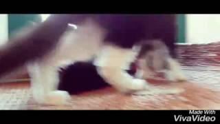 Выставка кошек в Пензе
