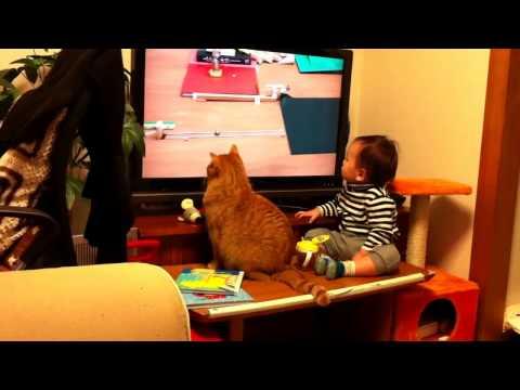 0 Gato e bebê prestando assistindo televisão
