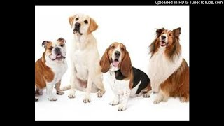 DOG MENACE IN MOLO NAKURU COUNTY