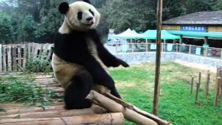 yingying816:Si Jia run to mama