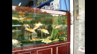 Koi aquarium in China - Fish shops