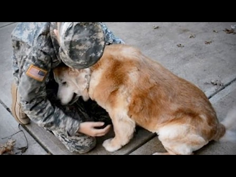 Dogs Meet Their Owner After A Long Time 🐶 [Funny Pets]