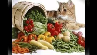 витамины для кошек в ампулах