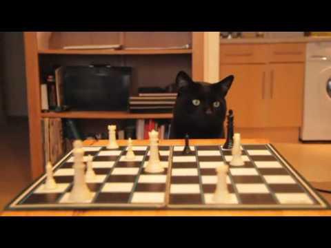 Cravendale - Can a Thumbcat Compilation