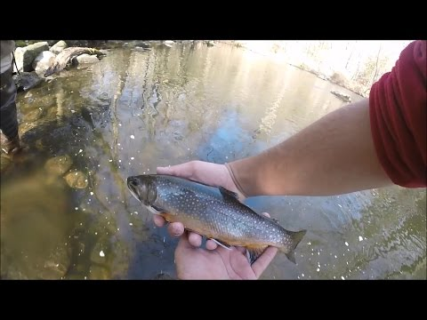 Fly Fishing the Mianus River