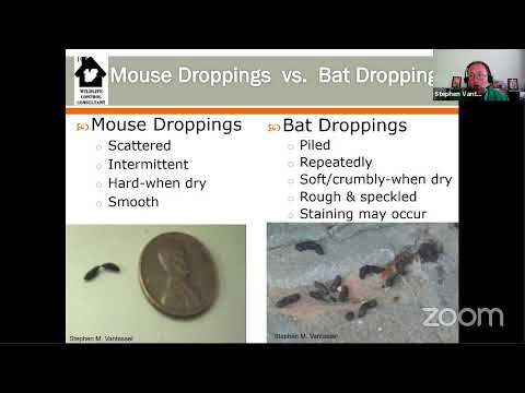 Inspecting Structures For Wildlife: Tips For Home Inspectors With With Stephen Vantassel