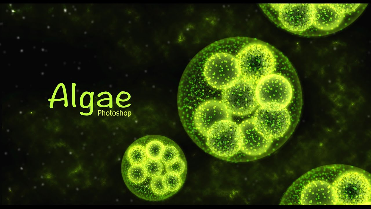 Algae Aquatic Plant Design Photoshop Tutorial Youtube