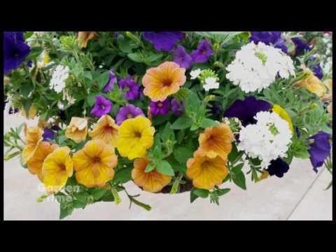 French Prairie Gardens Hanging Basket tips - YouTube