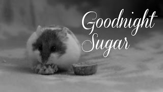 Goodnight Sugar