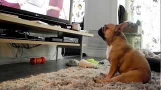 010: Hanging with The Dog Whisperer / French Bulldog, Jean-Claude (JCVDog)
