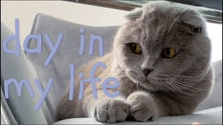 A Day in the Life of a Cat
