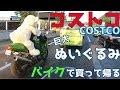 【コストコ巨大ぬいぐるみ】ツーリング中にバイクで買って帰るBuy a bear doll at Costco Take it home on a motorcycle