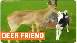 Deer Meets Family | Unexpected Guest