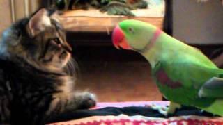 Repeat youtube video Cat vs Parrot