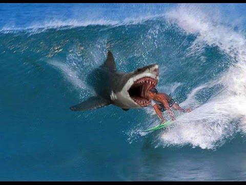 Выжить Посреди Океана Скачать Игру - фото 10