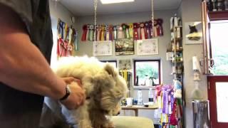 Sådan børster du din hund - del 3