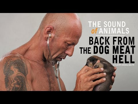 The Sound of Animals : back from the dog meat hell (Animal360 documentary)