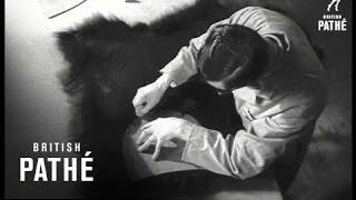 Bear Skins (1951)