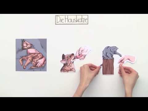ein schleichj ger die katze biologie zoologie youtube. Black Bedroom Furniture Sets. Home Design Ideas