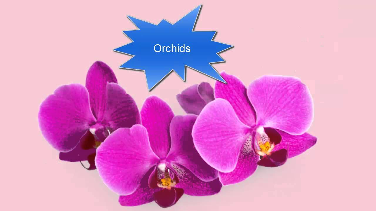 10 Flower Names In English For Kids Flower Names In English With