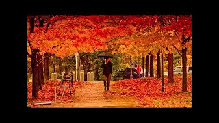 Four Seasons Vivaldi 10 Hours Relaxing Classical Music For Studying Concentration And Sleeping