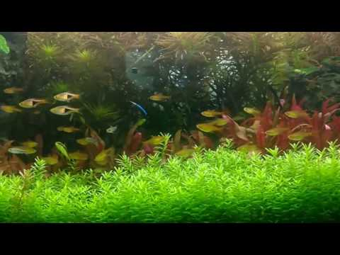 Schooling Fish Aquarium