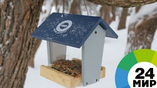 «МИР» дарит добро: сотрудники телеканала в Казахстане спасли птиц от голода - МИР 24