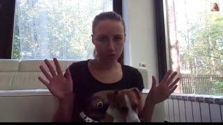 Собака одна дома. Видео со скрытой камеры. Мой опыт. Советы кинолога. Джина грызет носки!(Собаку необходимо приучать оставаться одной с малого возраста. Как это правильно сделать? ▽ Я в соц сетях..., 2014-10-13T07:47:13.000Z)