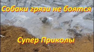 Собаки грязи не боятся