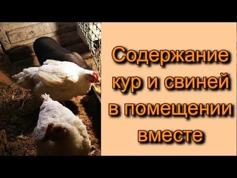 Вопрос: Почему кошек и собак нам жалко, а коров, индеек, куриц, свиней нет?